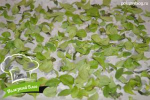 Заготовка сушеной стевии | Шаг 2